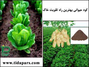 کود دامی بهترین راه تقویت خاک