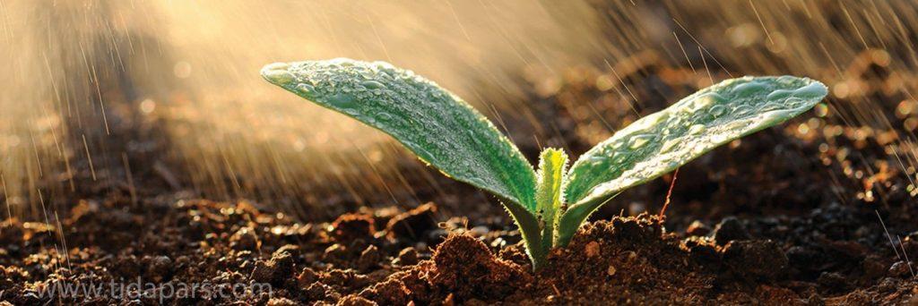 استفاده از آب آبیاری تمیز و عاری از آلودگی در گلخانه
