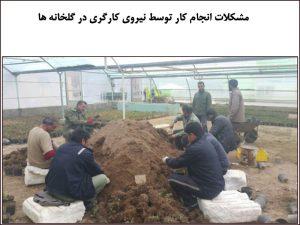 مشکلات انجام کار توسط نیروی کارگری در گلخانه ها